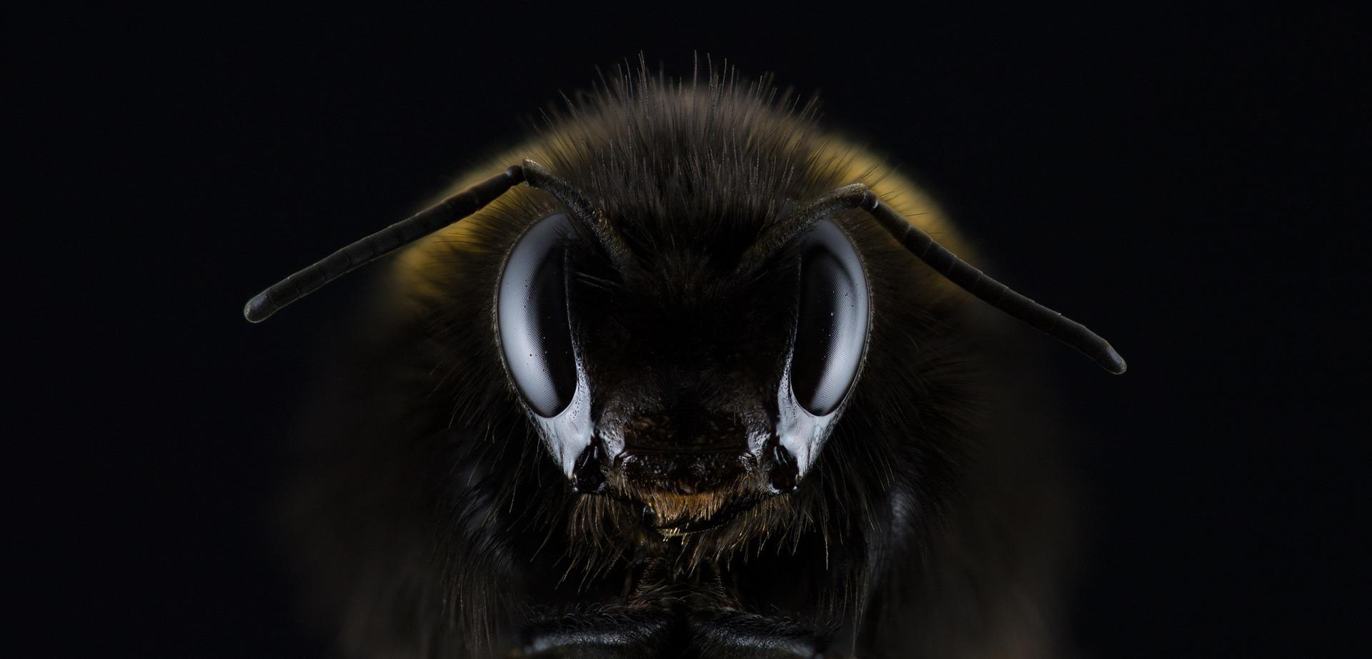 Santé : Les insectes pour lutter contre la faim dans le monde ?