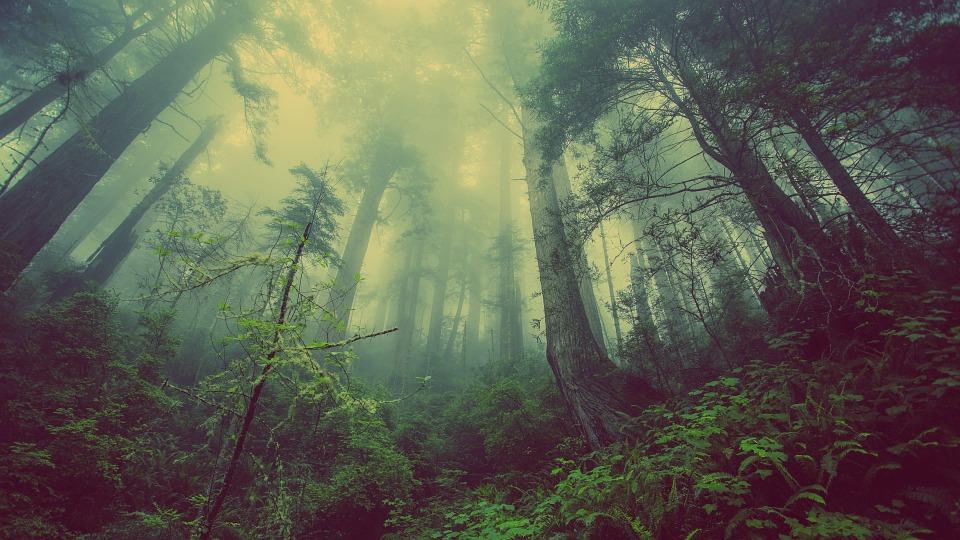 Les forestiers doivent être en mesure de calculer