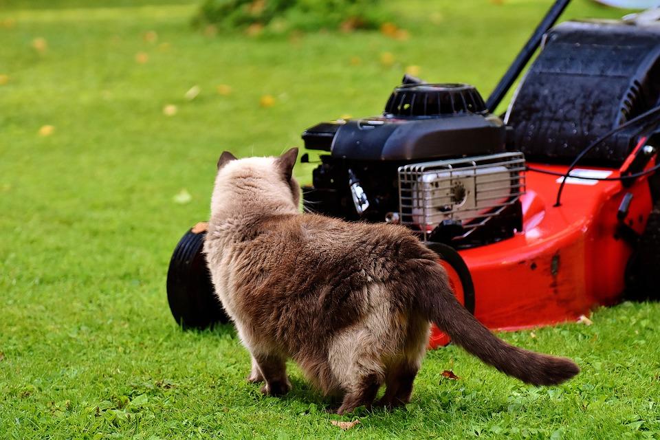 Comment tondre régulièrement sa pelouse?